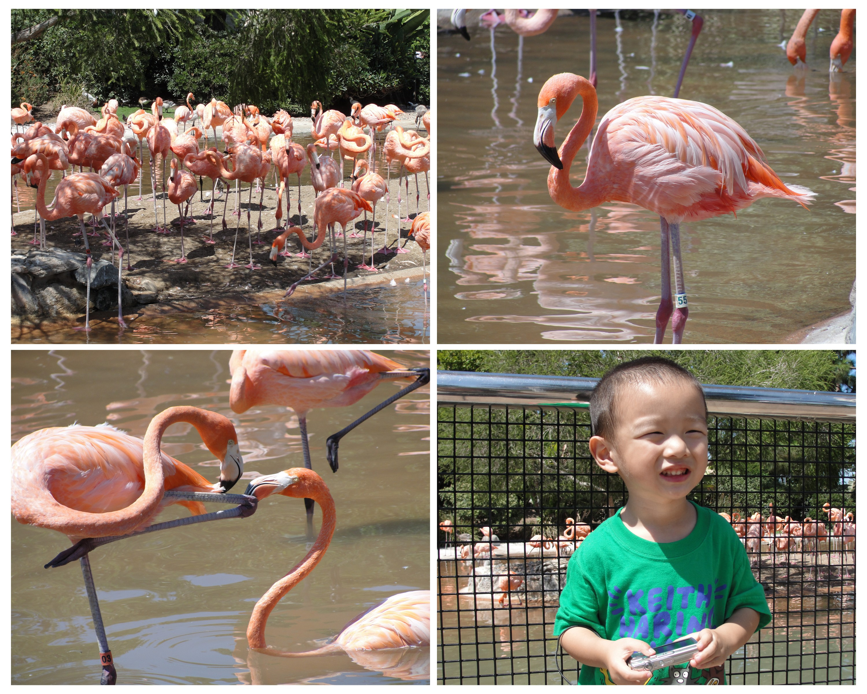 seaworld flamingo
