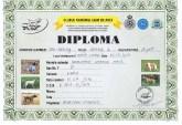_diploma