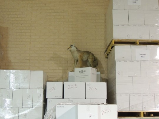 The Traveling Coyote