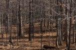 The Open Wonder Woods