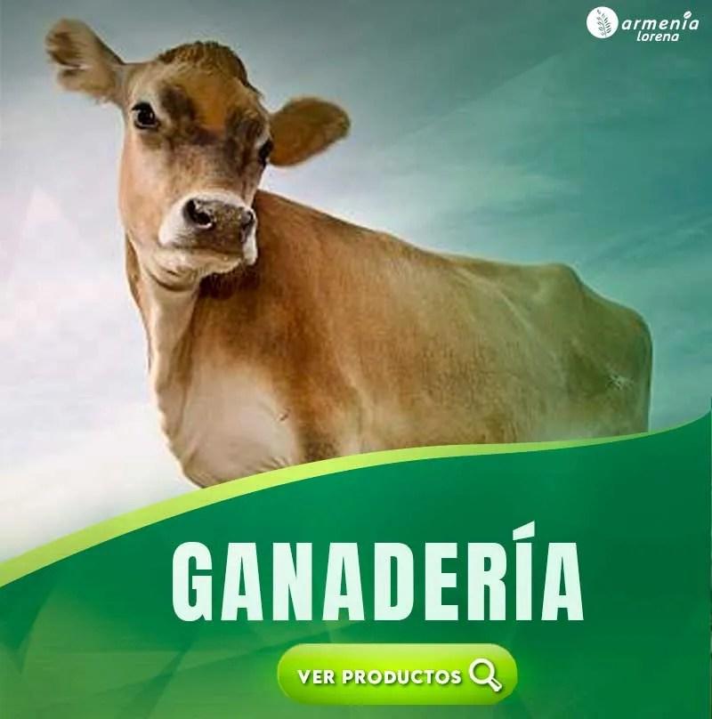 GANADERIA-JERSEY