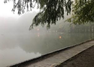 濃霧の別所沼公園