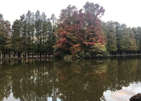 朝ウオーク別所沼公園