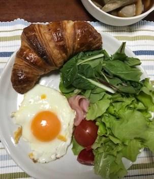 植木鉢ソーシャルディスタンスと自前レタスの朝食