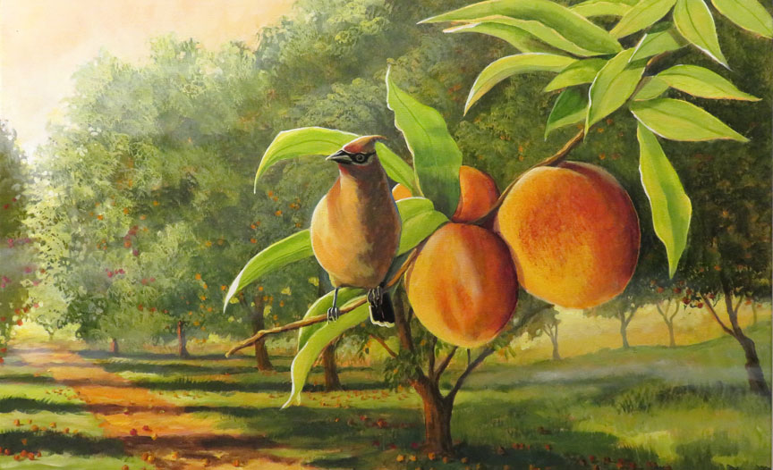 Peach-Close-Up