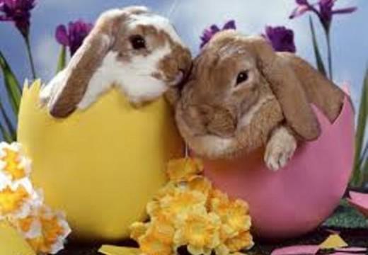 ¿Qué sentimiento te revive la Pascua? Por Elizabeth Santángelo.