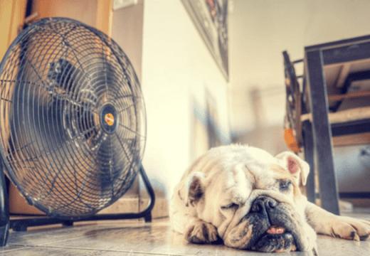 El sol y el calor se mantendrán en el inicio de semana.