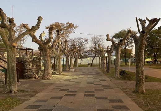 Pedido de informe: sobre poda de árboles y el destino del material producido.