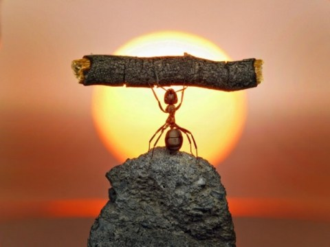 Leadership Lessons From Ants