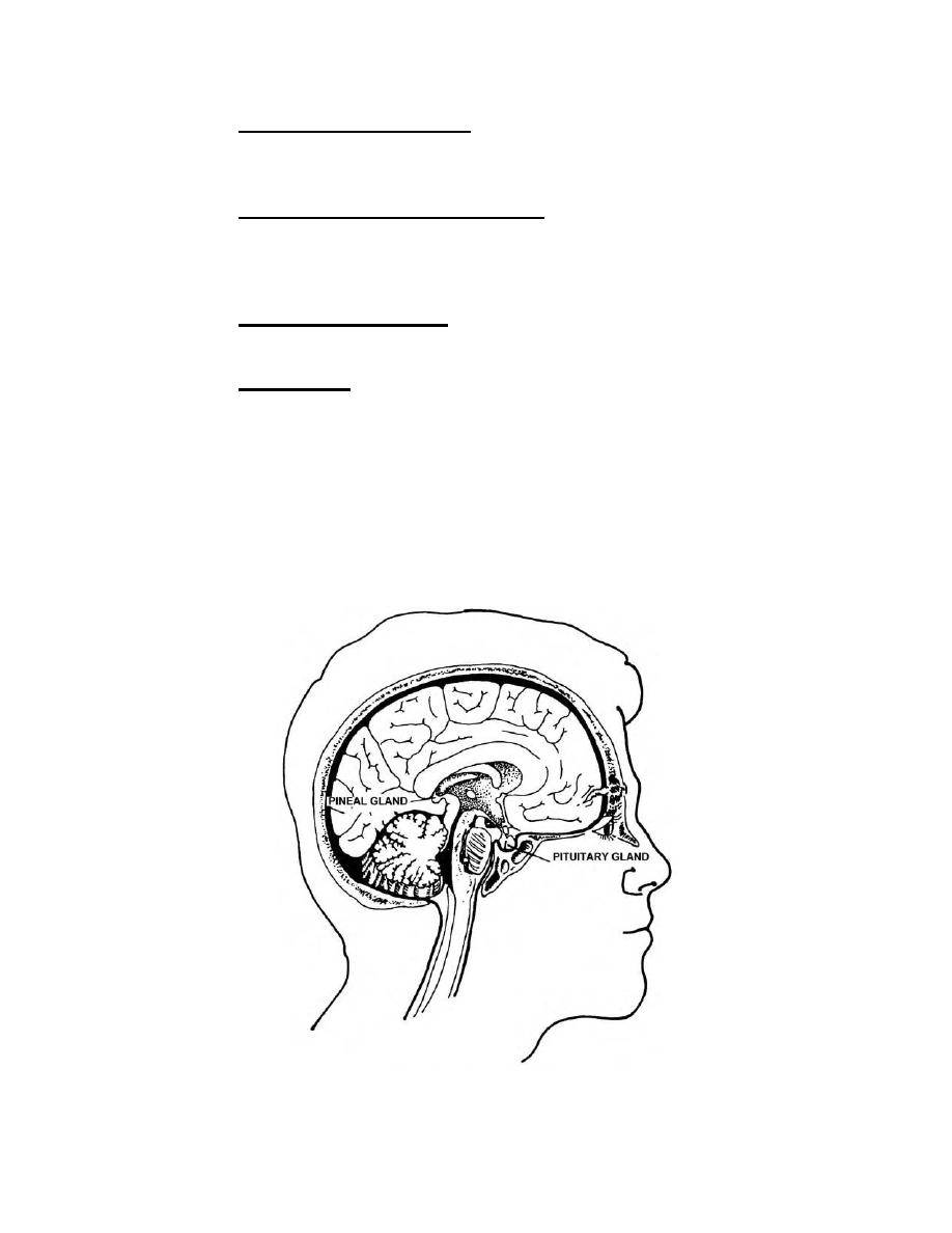 Figure 1-2. The pineal gland and the pituitary gland