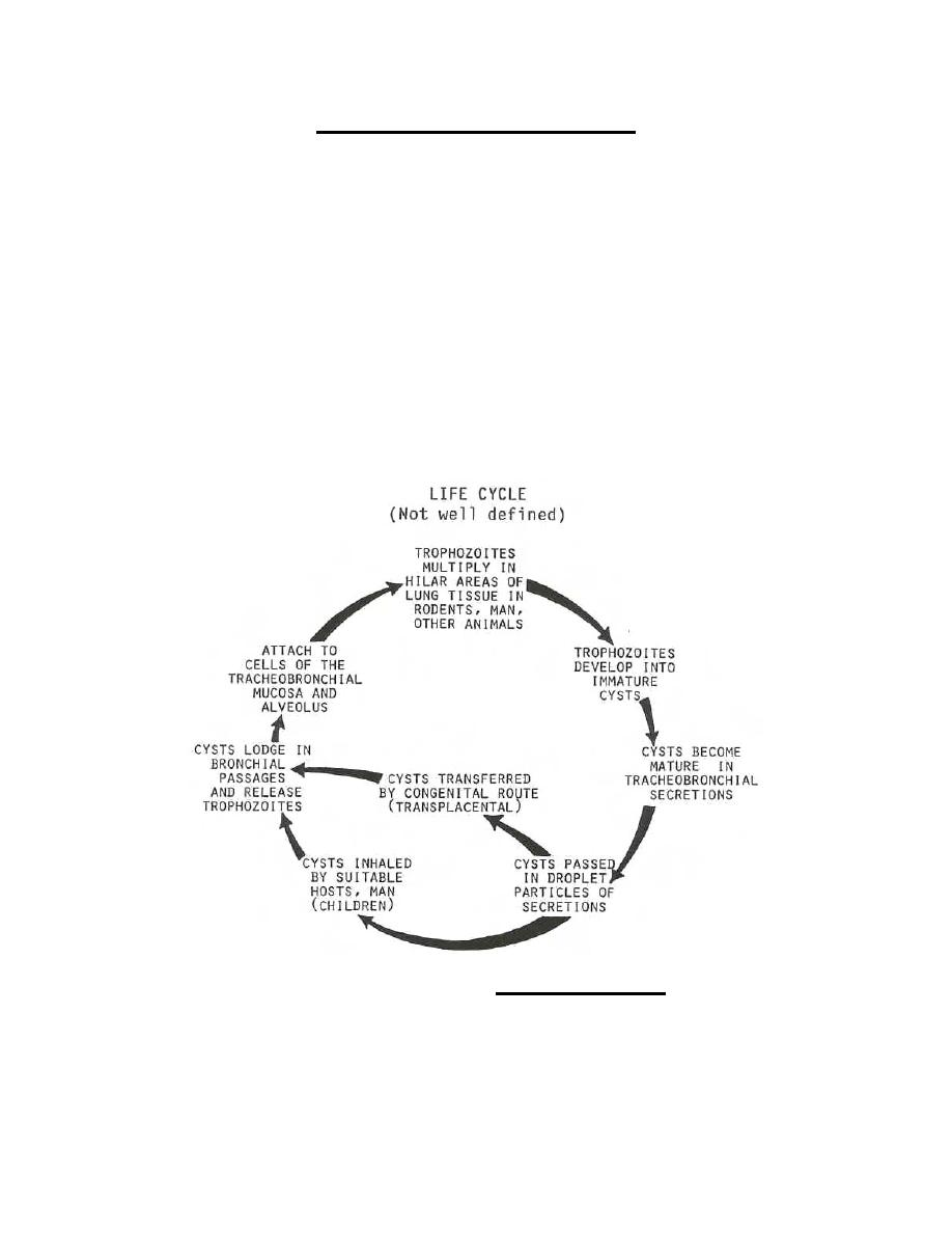Figure 2-15. Life cycle of Pneumocystis carinii