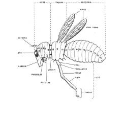 diagram of a primitive insect parasitology ii [ 918 x 1188 Pixel ]