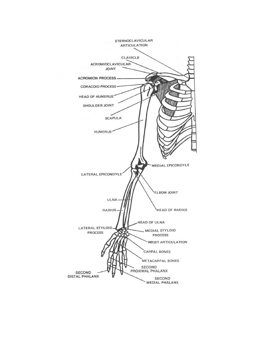Figure 2-8. Skeletal landmarks and palpation points of the