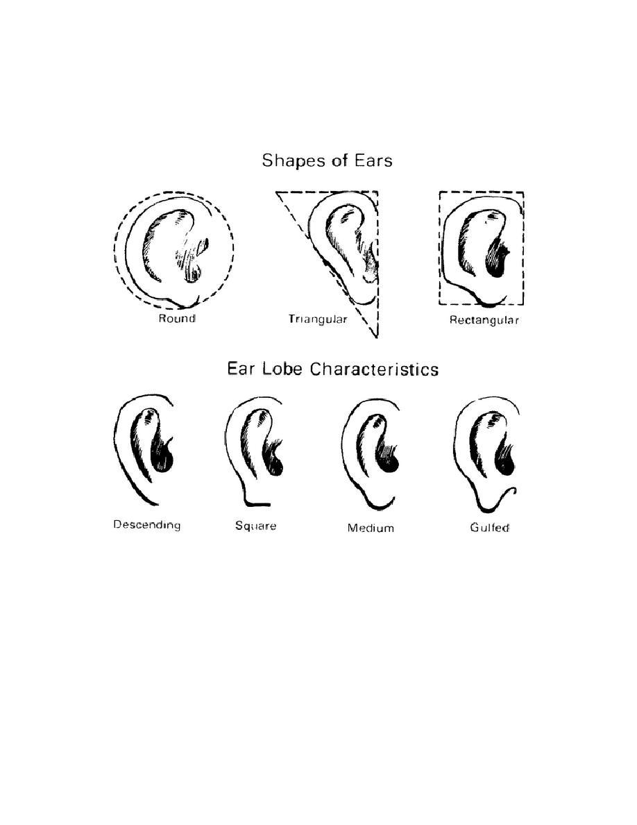 Figure 5-16. The Ears: Shape and Lobe.