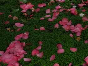 Jardin Albert Kahn (3)