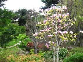 Jardin Albert Kahn (95)