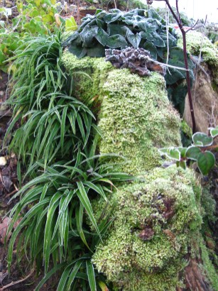 Reineckea carnea Cornus alternifolia Cyclamen