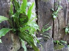 Jardin des fontaines pétrifiantes (9)