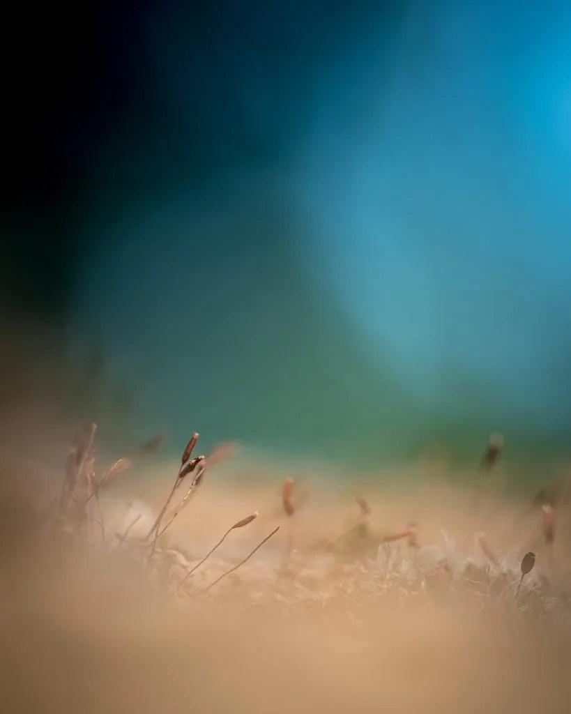 perfecte plaatje Arnhemsmeiske