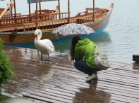 Marion and the Swan