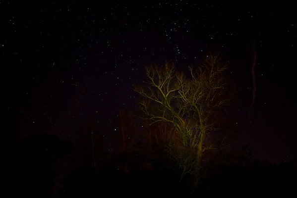 Silberweide bei Nacht