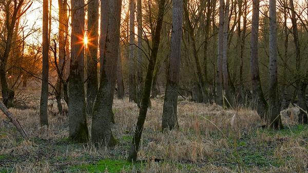 Sonnenuntergang im Rheinwald