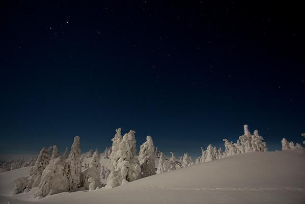 Winterwonderland - tief verschneite Fichten auf dem Akkanolke bei Arvidsjaur - Lappland, Schweden