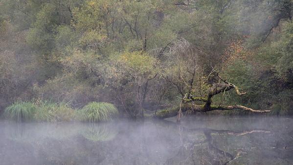 Herbststimmung im Naturschutzgebiet Silberweidenwald bei Steinmauern.