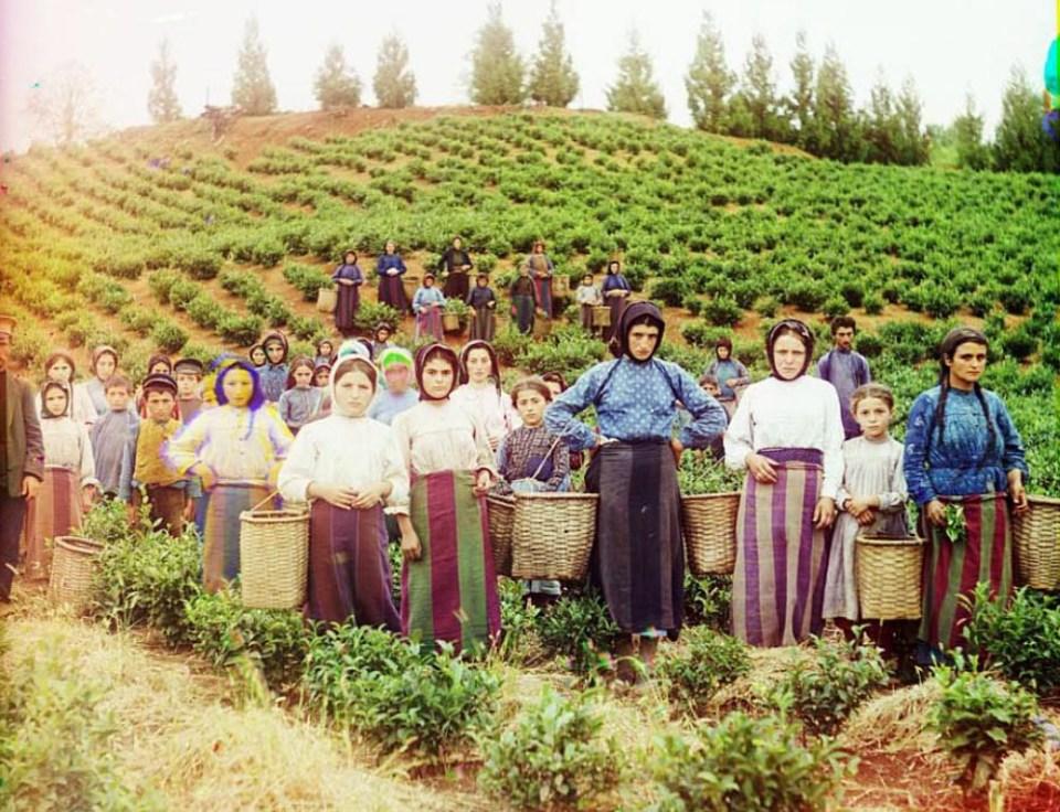 Greczynki zbierają herbatę na zboczach Czakwy.