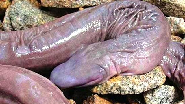 Snakes, worms, fish, clams, slugs (1/6)