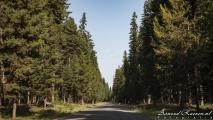 De weg door het bos bij Seeley Lake