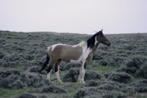 Feral horse in Adobetown