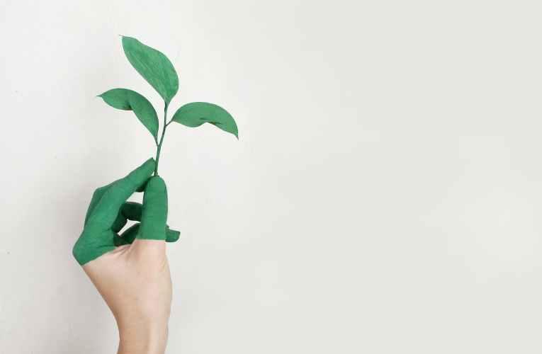 हरित राजनीतिक सिद्धांत/ पारिस्थितिकीवाद (Ecologism) 360 डीग्री कवरेज