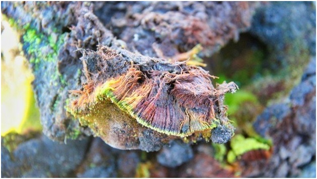 अंटार्कटीका में काई का पौधा कैसे जीवित रहता है?