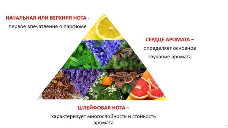 Ноты ароматов - пирамида аромата