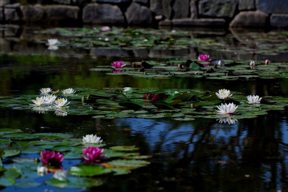 pond-3449590_1920