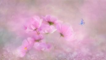 flower-3054734_1920