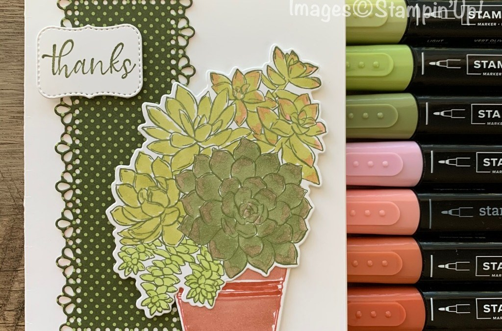 Simply Succulents Sneak Peek
