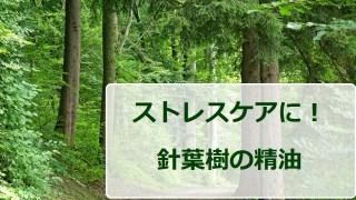 針葉樹の精油がストレスケアに良い3つの理由(サイプレス精油、ジュニパー精油、ブラックスプルース精油)