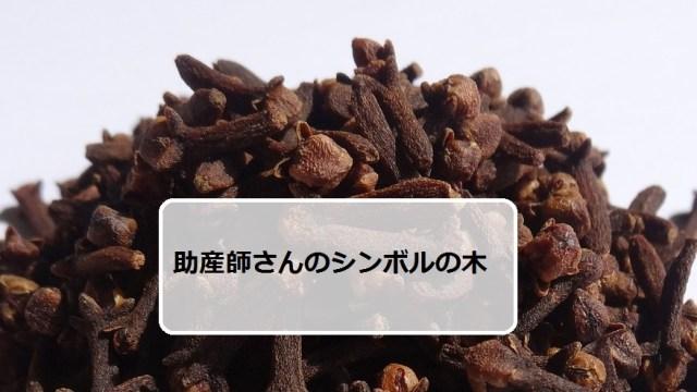 クローブ~助産師さんのシンボルの木