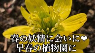 春の妖精に会いに^^(春の植物園へGo!)