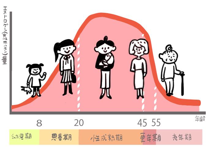 エストロゲン量の変化人生グラフ