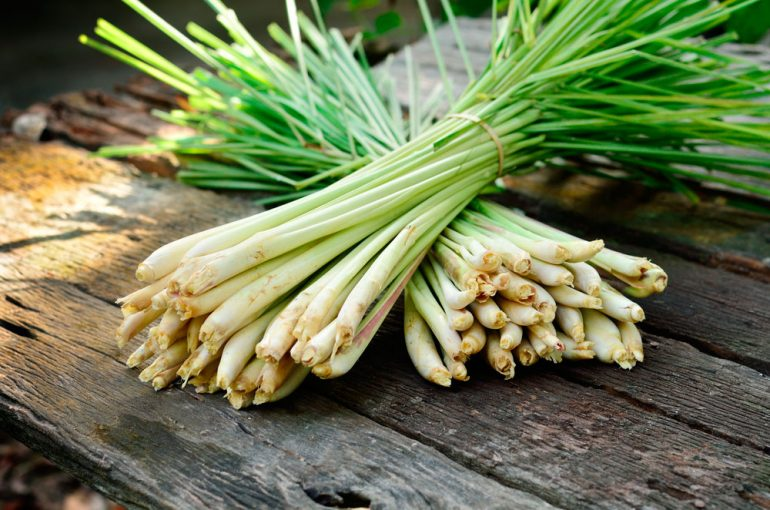Aceite esencial de lemongrass – cymbopogon citratus