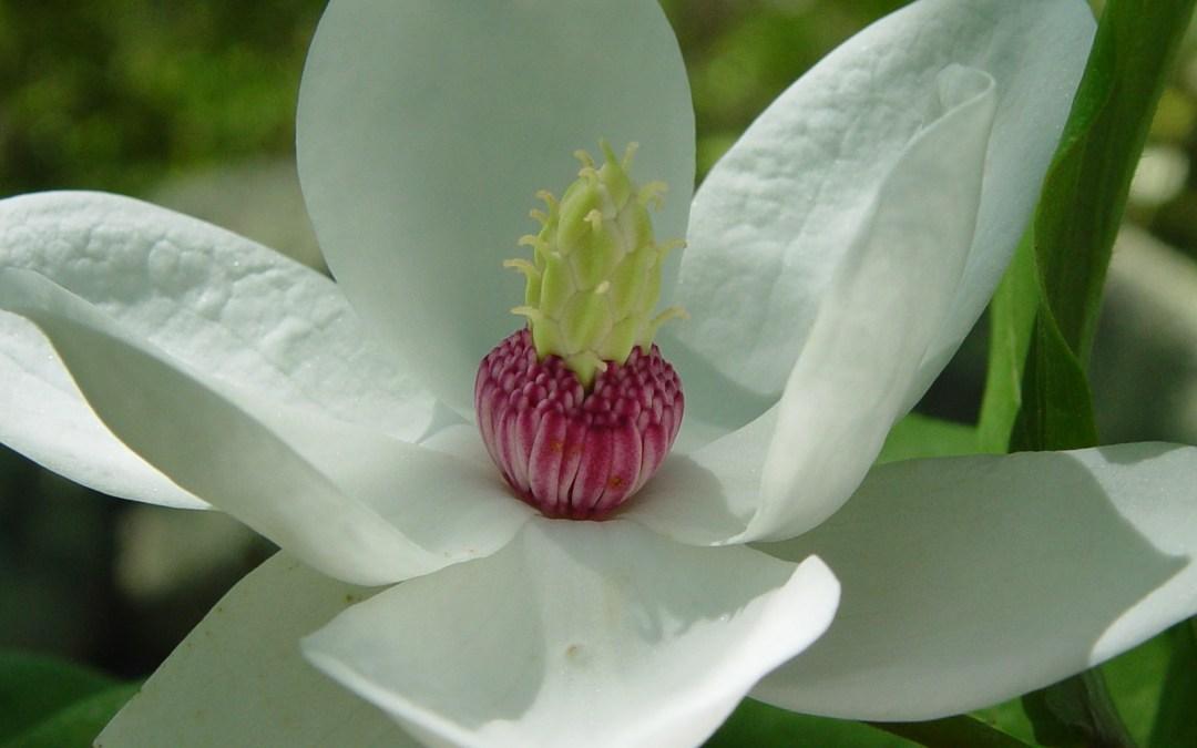 Relax con flores blancas