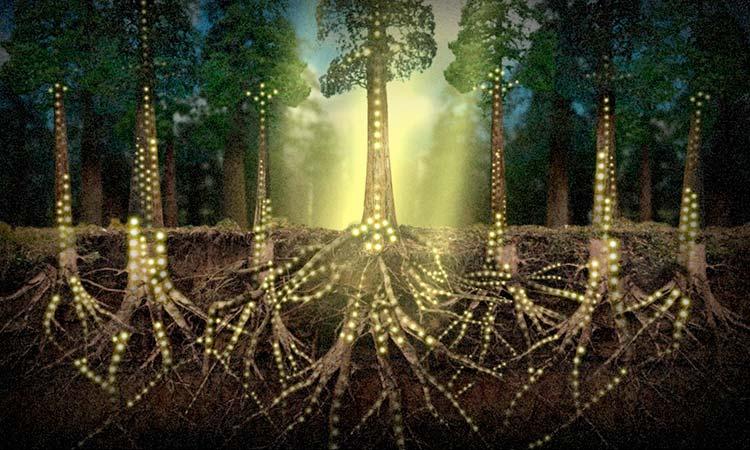 """La web del bosque"""