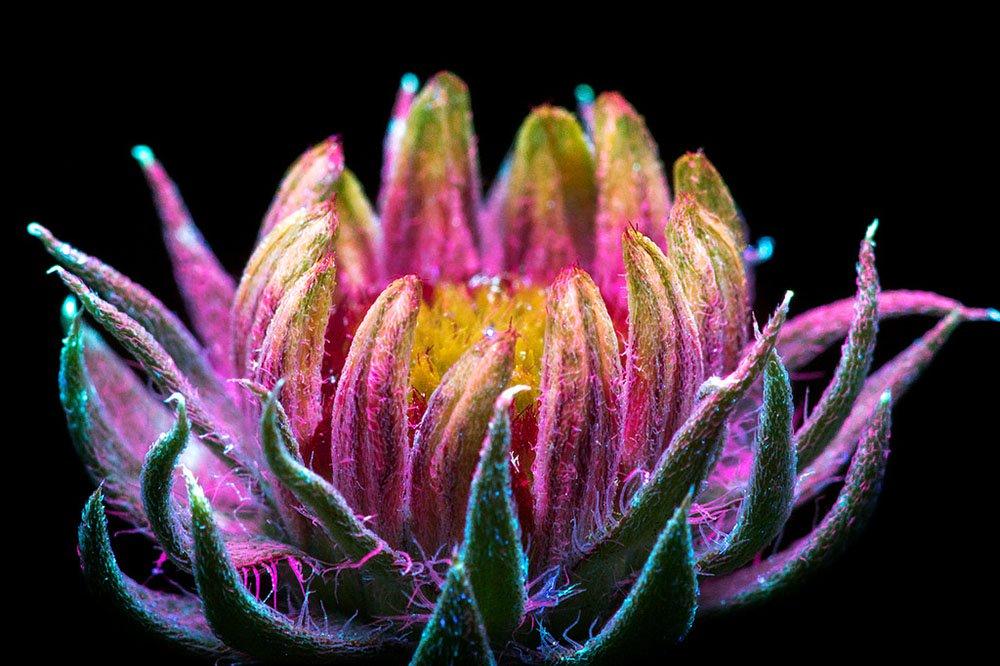 Craig Burrows fotografía la mágica luz invisible que emiten las plantas