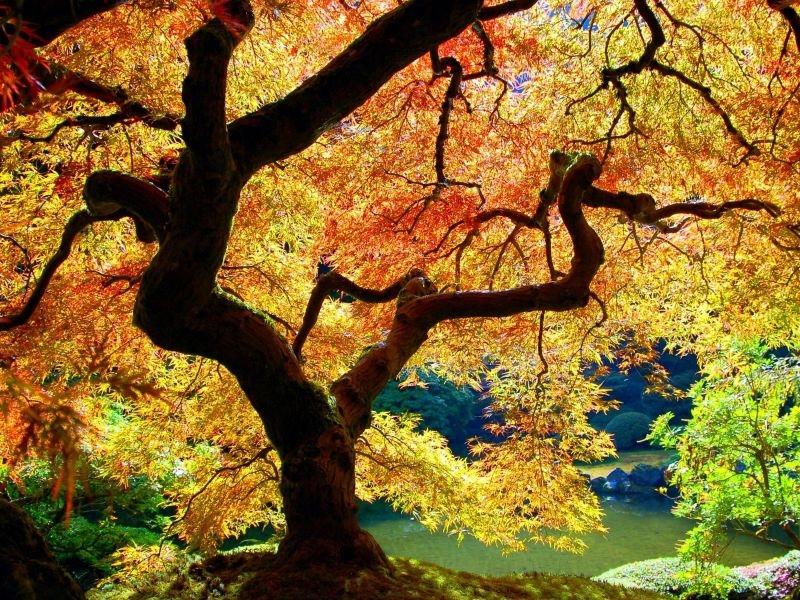El poder sanador de los árboles