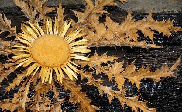 Flor del Eguzkilore: patrón emocional