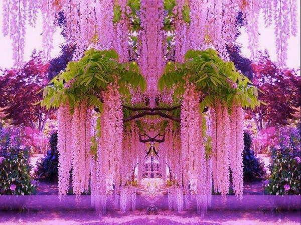 Japón y sus maravillosas wisterias