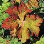 autumn-940968_640